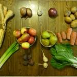 csa washington PNW veggies bok choi