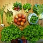 csa terry's berries organic summer produce