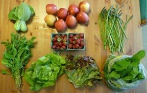 csa terry's berries organic food pnw