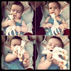 vulli sohpie the giraffe teether toy
