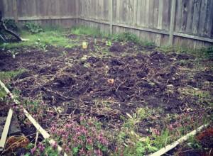 13 x 13 garden plot
