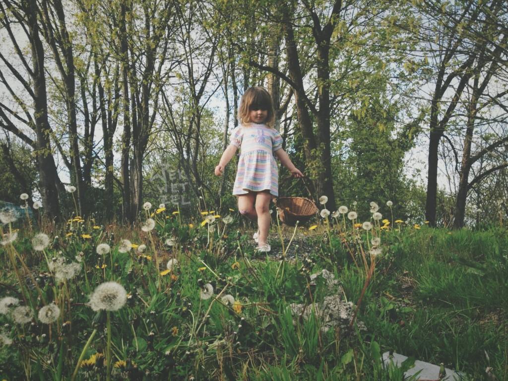 phoebe picks dandelions
