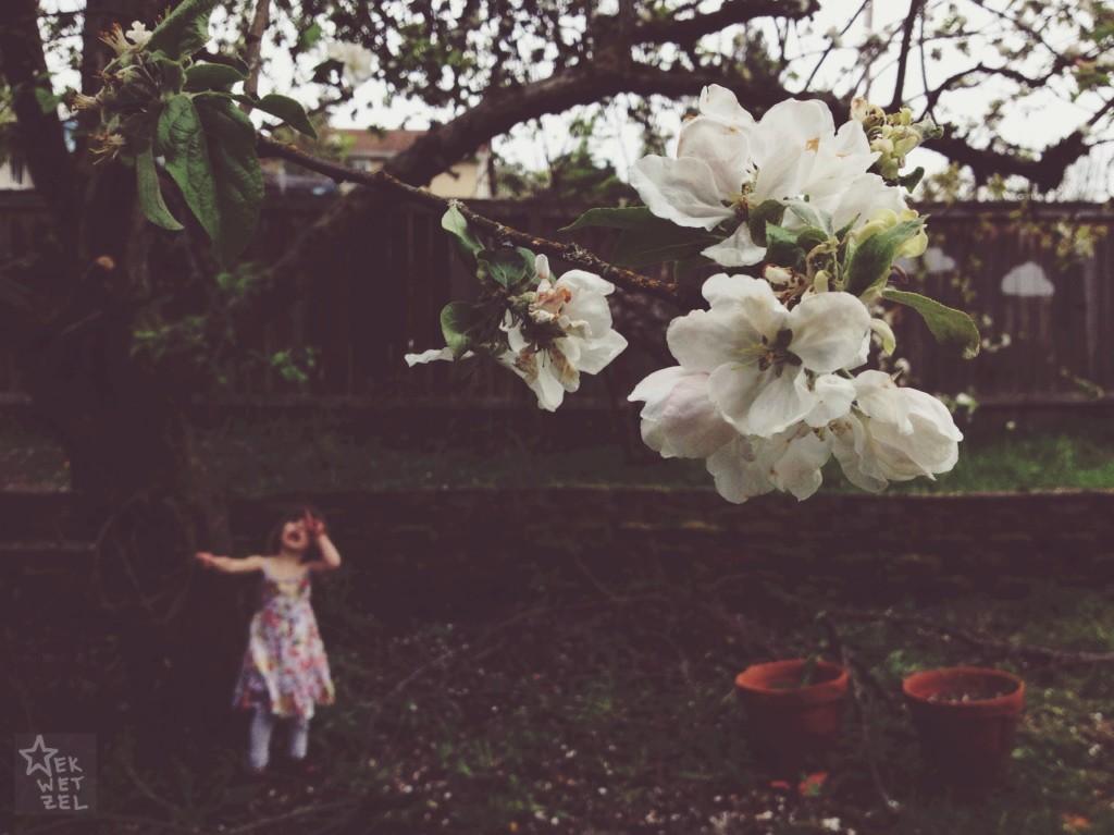 eveningtime under the apple tree