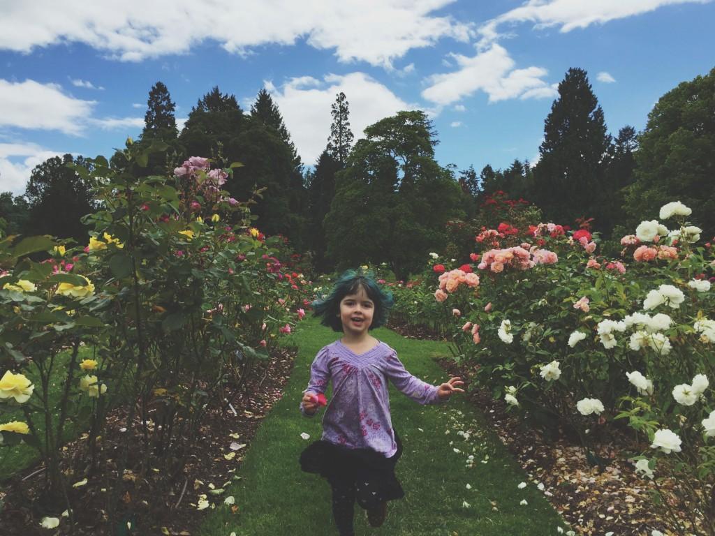 point defiance rose garden